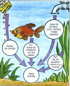 Ciclo de vida de um aquário