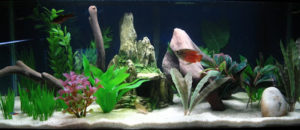 Plantas para aquários