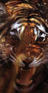 O tigre de Bengala